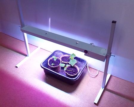 Лед светильники для растений